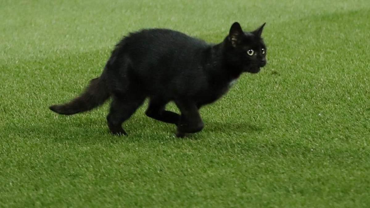 Матч чемпионата Англии прервали из-за черного кота: курьезное видео
