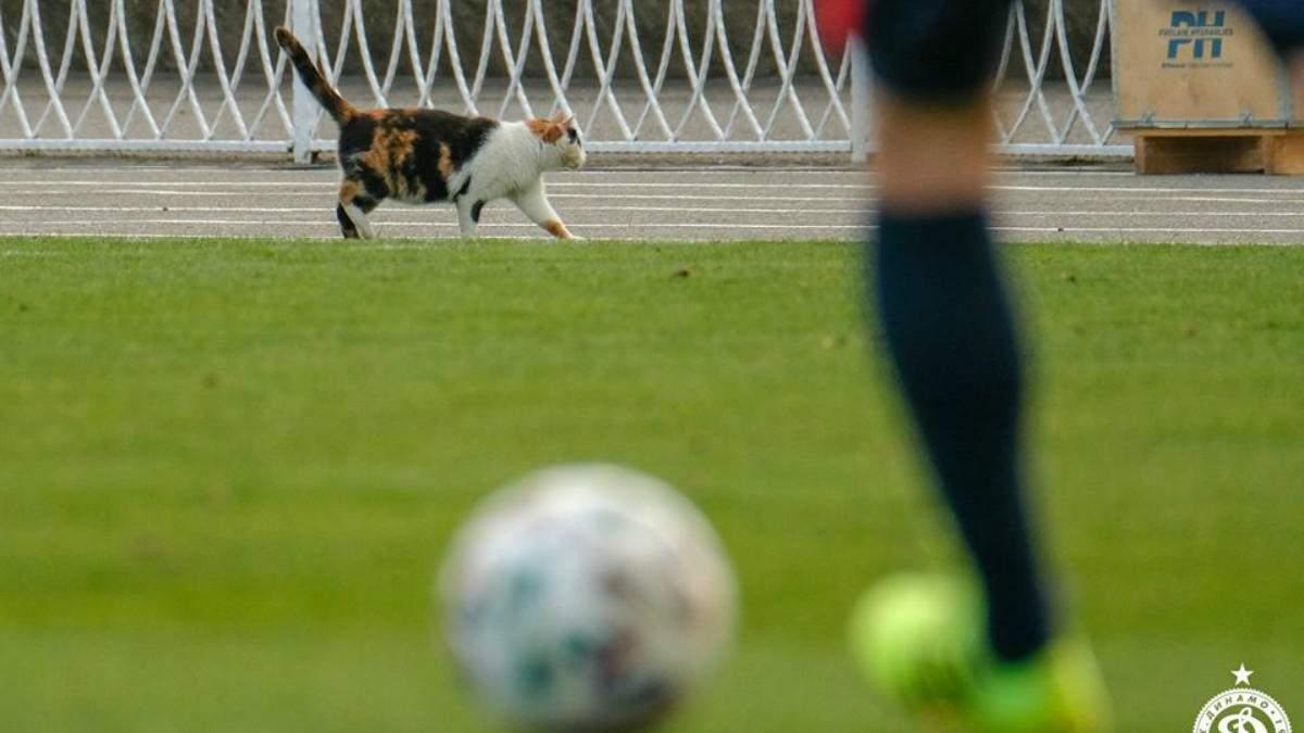 Кошка на футбольном поле во время матча в Беларуси