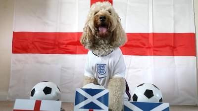 Англійський песик спрогнозував результати Євро-2020, але щось пішло не так: кумедне відео