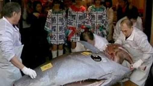 В Японии за рекордную сумму продали голубого тунца