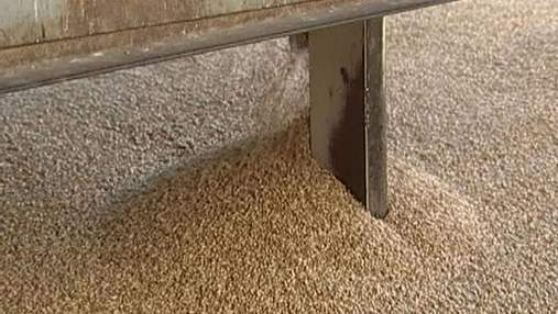 Через 5 лет Украина сможет собрать урожай зерна в 80 млн т