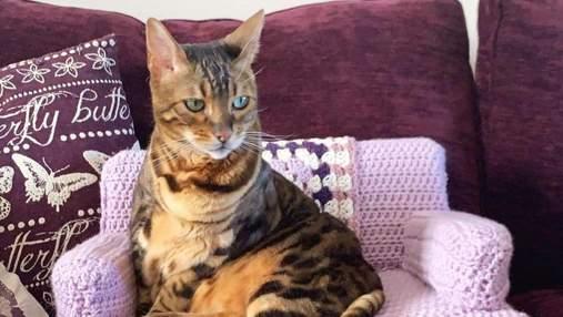 Олимпийский чемпион собственноручно связал диван для своих котов