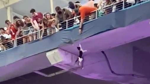 У США вболівальники героїчно врятували кота, який зірвався з верхнього ярусу стадіону: відео