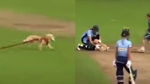 У Британії пес вибіг на поле для крокету й поцупив м'яч: курйозне відео