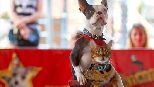 Сами придумали трюк: кот с собакой проехались на самокате и попали в Книгу рекордов Гиннесса